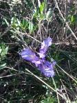 Sella del Diavolo – irisselvatico