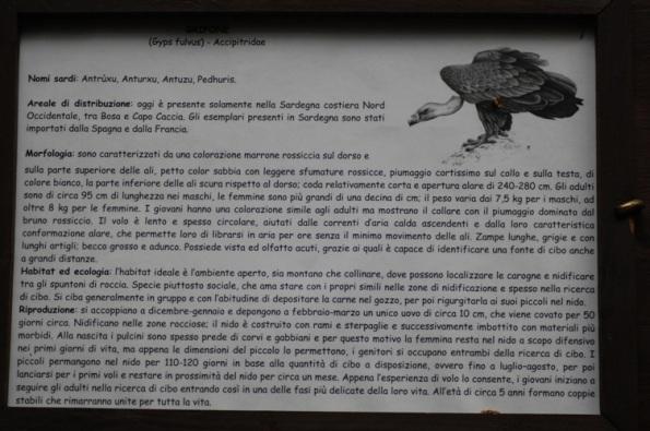"""Foresta demaniale """"Sette Fratelli"""", cartello informativo sul Grifone (ottobre 2015)"""
