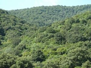 bosco composto da c.d. ceduo invecchiato, fustaia transitoria