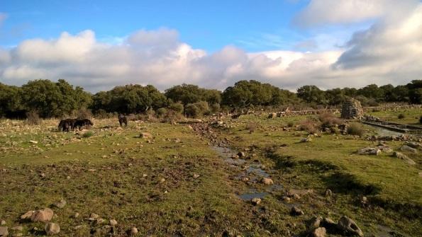 Cavallini della Giara presso Mitza Salamessi