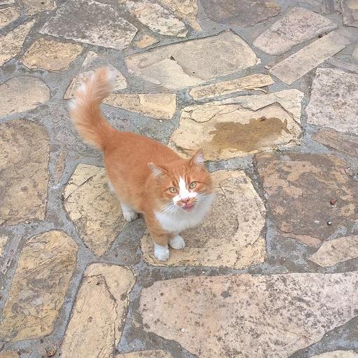 Gatto colonia felina Bonaria