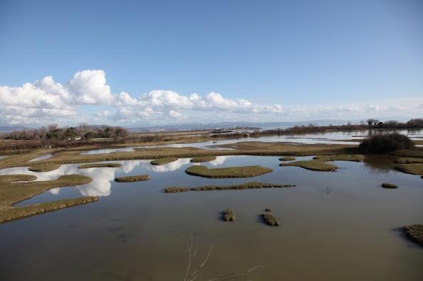 L'idea dell'ornitologo padovano Stefano Bottazzo: ripristinare i terreni acquitrinosi all'interno del Parco Colli Euganei