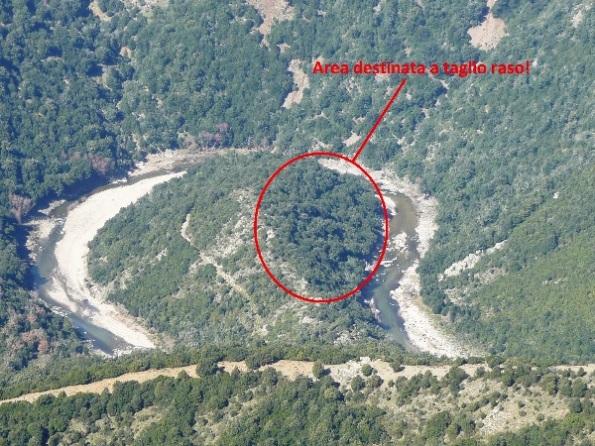 ansa boscata del Fiume Flumendosa destinata al taglio