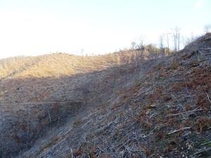 Colli Euganei, Torreglia, versante est