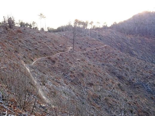 Colli Euganei, Torreglia, versante nord