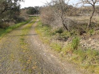Ploaghe, Cantarisone, stato delle campagne dopo la bonifica ambientale (marzo 2016)
