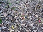 bossoli abbandonati in campagna dacacciatori