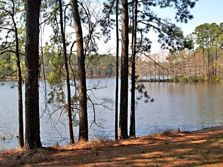U.S.A., Texas, David Crockett National Forest (foto www.austinchronicle.com)