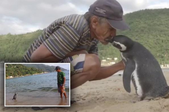 il pescatore Joao e il pinguino Dindim