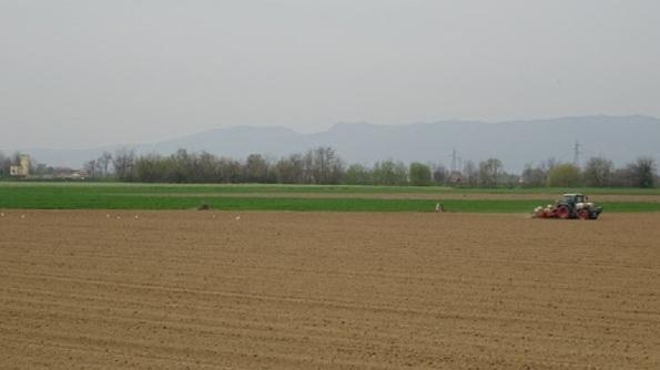 S. Maria di Veggiano, campagna (2016). Alberi e siepi sono radicalmente diminuiti