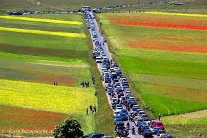 Norcia, Piani di Castelluccio, traffico veicolare (foto Luca Giorni)