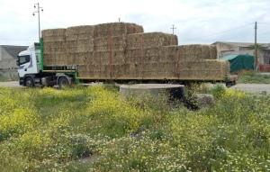 camion di foraggio per i cavallini della Giara