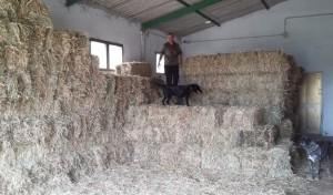 foraggio custodito per i Cavallini della Giara