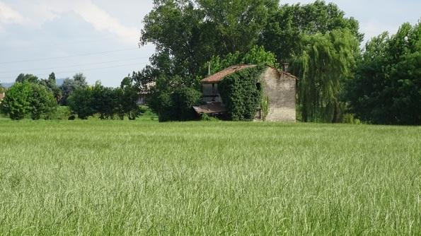 campo di Loietto italico (foraggera), buono per la fauna selvatica