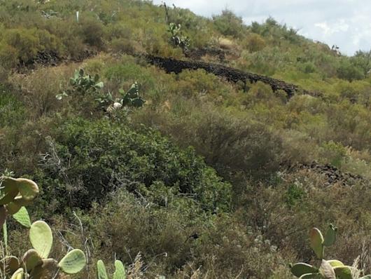 Isola di Stromboli, Ginostra, vegetazione al luglio 2014