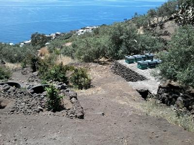 Isola di Stromboli, Ginostra, parte alta dell'alveo del Torrente Vestio, asportazione della vegetazione originaria e realizzazione di alveari (giugno 2016)