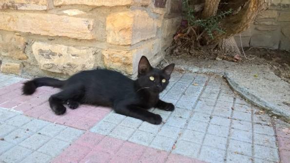 Gattina nera cerca casa!