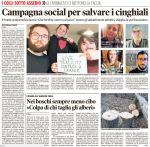 mattino_2016-11-09_colli-campagna-cpp-pro-sterilizzazione-cinghiali-1