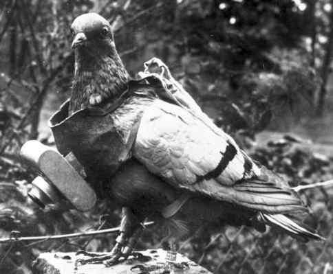 il piccione Cher Ami