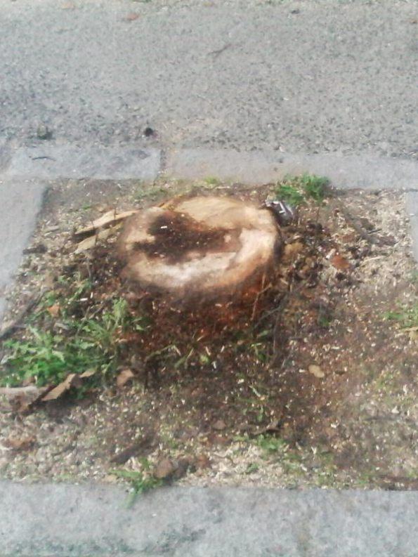 Nuoro, Viale Sardegna, albero tagliato (dicembre 2016)