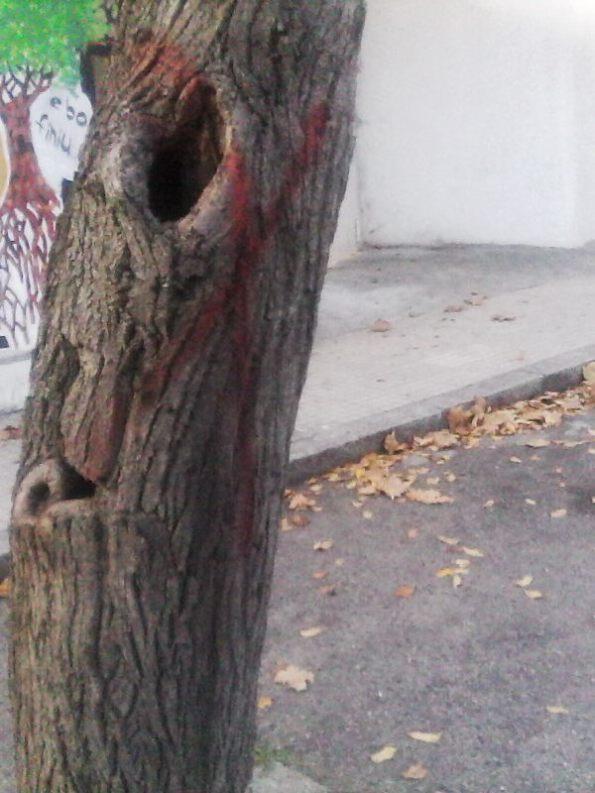 Nuoro, Viale Sardegna, albero da tagliare?