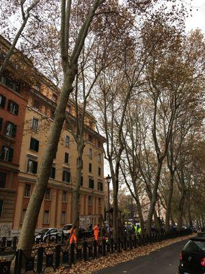Roma, Prati, giardino pubblico di Via Gulli, taglio di un albero (6 dicembre 2016)