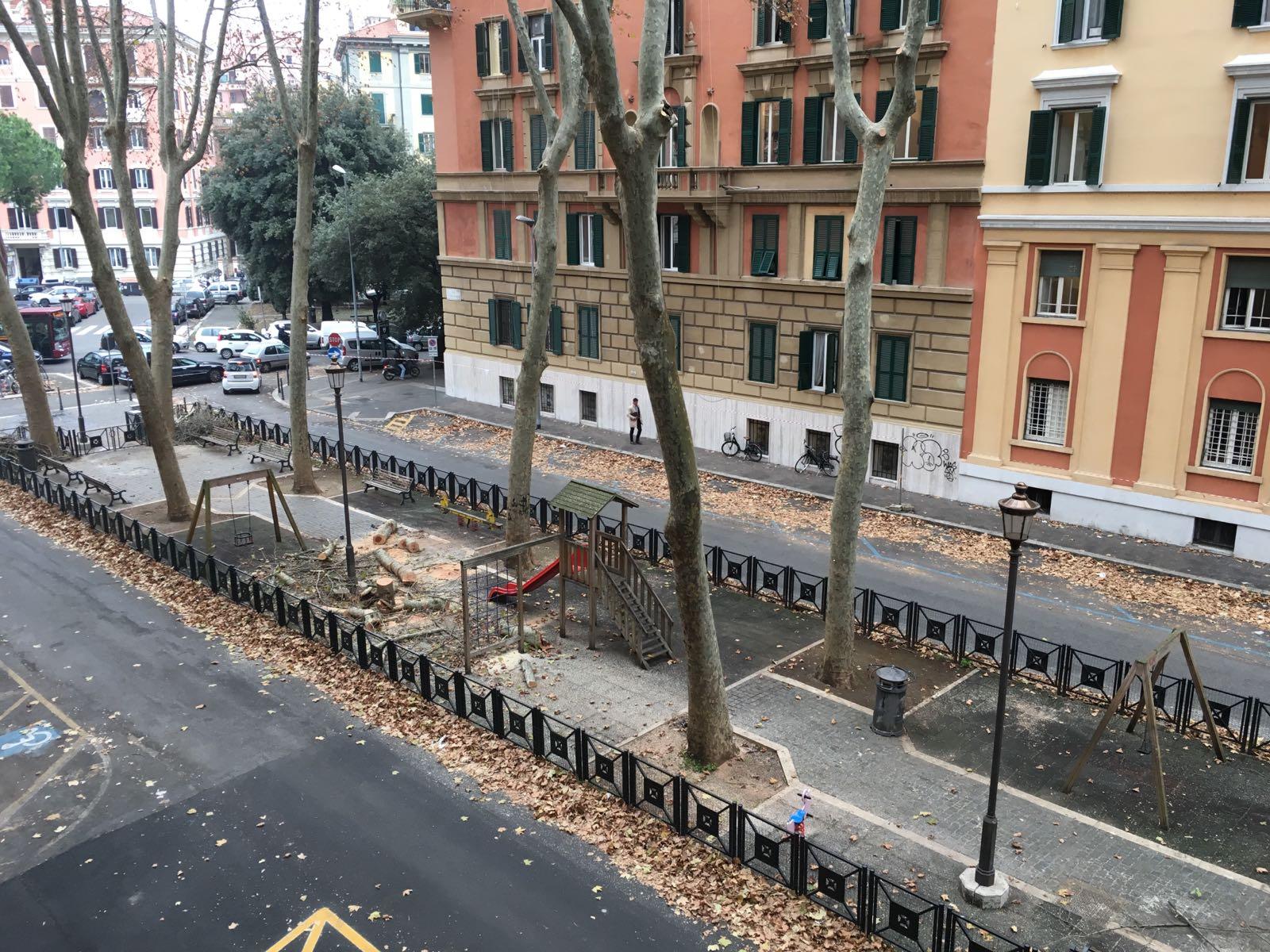 Roma, Prati, giardino pubblico Via Gulli, albero tagliato