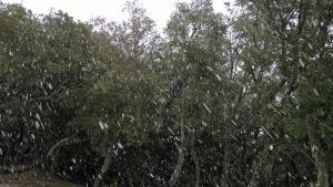nevicata nel bosaco