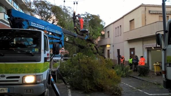 Cagliari, Via Milano, intervento di emergenza per un albero caduto (21 gennaio 2017)