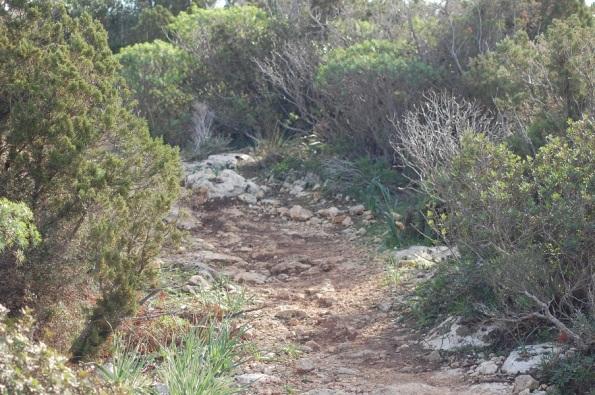 Cagliari, Sella del Diavolo, recenti tagli della vegetazione per apertura di percorso ciclistico
