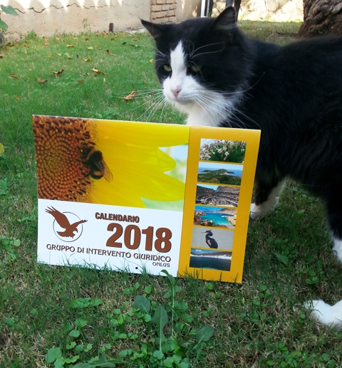 foto calendario x blog