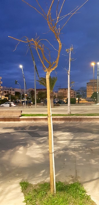 albero rally