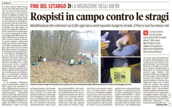 Mattino_2018-02-02_Colli migrazione rospi mobilitazone volontari