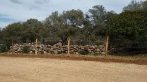 Baunei, Golgo, recinzione (marzo 2018) (2)