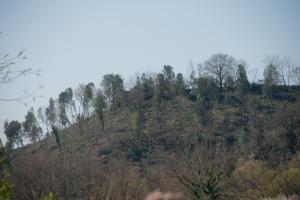 Roma, Castel Romano (riserva naturale Decima-Malafede), tagli boschivi, 2 - Copia