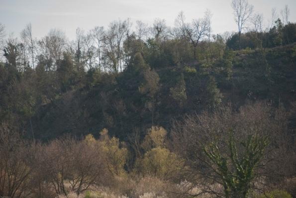 Roma, Castel Romano (riserva naturale Decima-Malafede), tagli boschivi, 3 - Copia