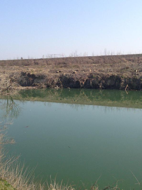 Vigonovo, sponde del Fiume Brenta dopo il taglio della vegetazione riparia (marzo 2018) (2)
