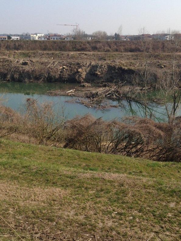 Vigonovo, sponde del Fiume Brenta dopo il taglio della vegetazione riparia (marzo 2018)