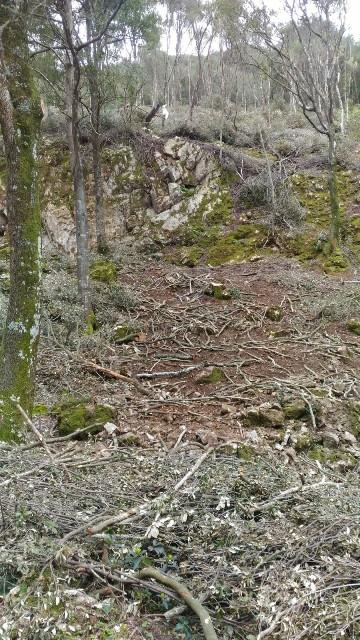 Fluminimaggiore, Arenas, tagli boschivi (aprile 2018) (2) - Copia