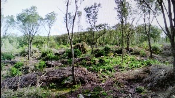 Fluminimaggiore, Arenas, tagli boschivi (aprile 2018) - Copia