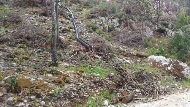 Fluminimaggiore, Arenas, Canale Fridu, tagli boschivi (giugno 2018), 2 - Copia