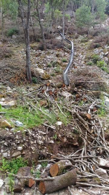 Fluminimaggiore, Arenas, Canale Fridu, tagli boschivi (giugno 2018) - Copia