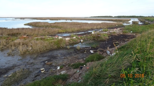 Laguna veneta (fra Codevigo e Chioggia), rifiuti vari.jpg